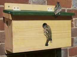 hang and how to maintain your nest box