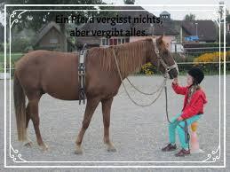 Pferdesprüche Kreatives Von Salomes Webseite