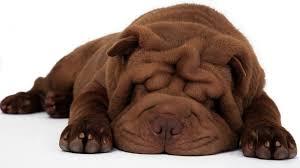 Картинки по запросу puppy dream