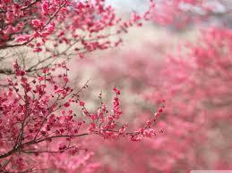 Cherry Blossom Background Wallpaper 1400x1050 29661