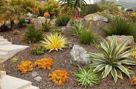 Small Picture Best Of 3427 16 Succulent Garden Design