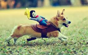 Puppies And Piña Coladas