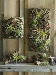 air plant wall art home decoration with air plants unique wall decor ideas wood diy air