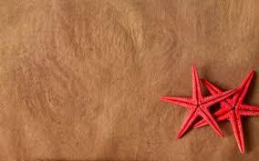 college essays college application essays essay on starfish essay on starfish