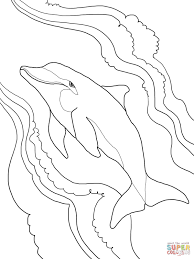 Small Picture Bottlenose Dolphin coloring page Free Printable Coloring Pages
