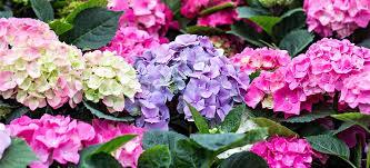 poisonous plants pdsa