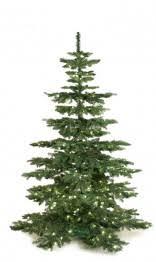 Luxury Tree Plain 7ft