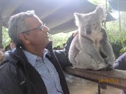 koala essay essay about journey koala introducing great ocean road essay about journey nursing entrance essay nursing journey allnurses koala