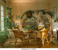 lighting for houseplants. Cane Chairs And Lush Green Houseplants In French Townhouse Dining Room With Up-lighting - Lighting For E
