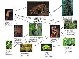Food web asian rainforest