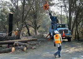 pg e to cut down 25 000 trees damaged by wildfire ksro