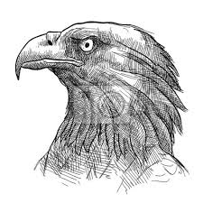 Fototapeta Skica Tetování Orel