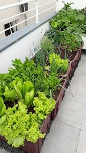 how to make 10 vegetables you can grow