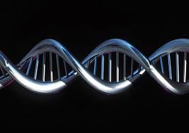Risultati immagini per sequenza genetica