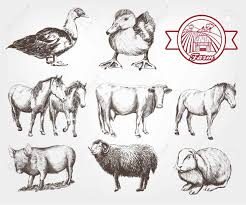 Sketches Animal Farm Animals Set Of Vector Sketches On A White Background Royalty
