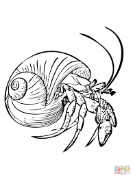 Small Picture Common Hermit Crab or Soldier Crab coloring page Free Printable
