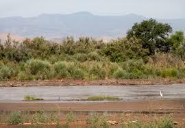NM, species lucky a river runs through woman's generosity » Albuquerque  Journal