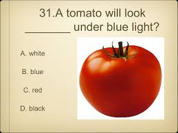 How Would A Tomato Look Under Blue Light Bellringer Which Color Of Light Bends The Least And Why Red