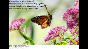 Butterfly Friendship Quotes Friendship Is Like A Butterfly Quotes