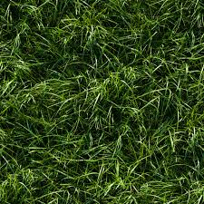 seamless long green grass ground texture tall seamless r61 tall