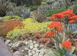 Small Picture 6237 best desert garden images on Pinterest Desert gardening