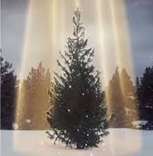 Home Depot Christmas Tree Replacement Lights Live Christmas Tree Price Round Up Marvins Lowes The