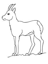 Small Picture Chamois Goat Antelope coloring page Free Printable Coloring Pages