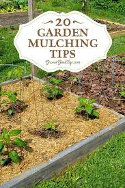 best mulch for garden. Plain For 20 Garden Mulching Tips From Seasoned Growers  Gardening Pinterest  Gardens Ideas And Plants Throughout Best Mulch For E