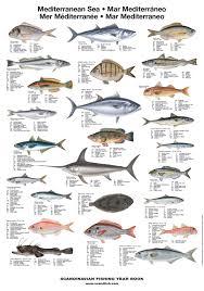 Mediterranean Unique – Fish Sea Poster