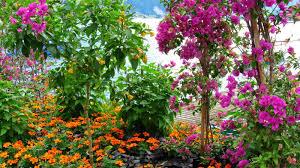 Small Picture Flower Garden Wallpaper Free Downloadhttprefreshroseblogspotcom