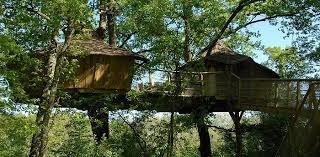 luxury tree house resort. Luxury Tree House Resort S