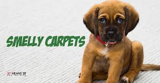 get rid of the dog smell in your carpet
