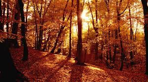 Autumn Forest Wallpaper on WallpaperSafari
