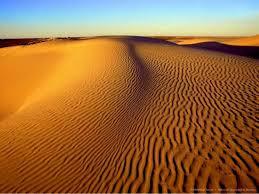 Животные пустыни Животный мир Животные пустыни