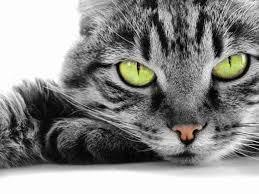 Αποτέλεσμα εικόνας για γάτΕς