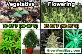 Cannabis Plant Growth Chart Cannabis Temperature Tutorial Grow Weed Easy