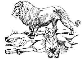 Disegno Da Colorare Leone E Leonessa Cat 16633 Images