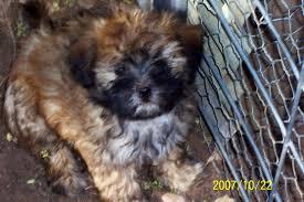 past puppies