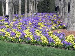 spring flower beds university of