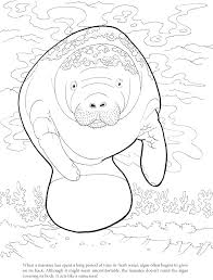 manatee coloring page 2. Exellent Page Likely Free Manatee Coloring Pages 10 Page With 2