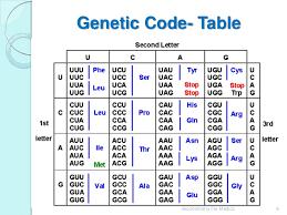Universal Genetic Code Chart Genetic Code