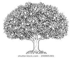 realistic apple tree drawing. Fine Apple Engraved Apple Tree Full Of Ripe Apples And Realistic Apple Tree Drawing I