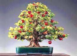 Columnar Fruit Trees For Sale U2013 Bills GardenFull Size Fruit Trees For Sale