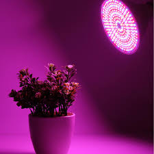 Growing Bonsai Under Led Lights 15w Par Led Grow Light