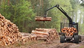 Wood Not So Green A Biofuel Logging May Have Greater Impact On