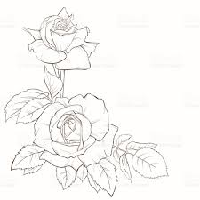 Rose flower hand drawn contour lines and strokes element for design royalty