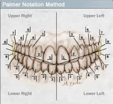 Palmer Notation Numbering System 10 Download Scientific