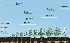 Outlook Herbicide Label Cotton Growth Stage Chart Top
