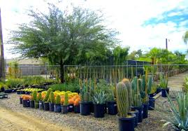 denver garden centers. Garden Centers Near Me The Nursery That You Are Most Likely To Find At Is Nurseries Which Located In Mesa And Country Club Roads Denver