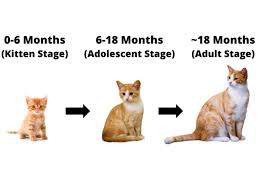when do cats stop growing what age do